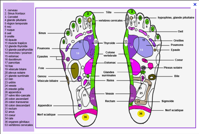 Reflexologie cartographie du pied